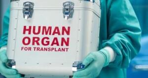 органы человеческие